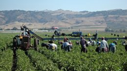 Farmworkers win overtime pay