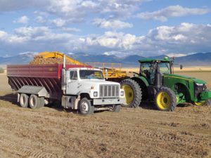 avid Cottom harvests Russet Norkotah seed potatoes into a truck driven by his son, Shane.