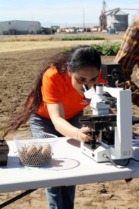 Sapinder Bali uses the microscope to see a nematode juvenile.