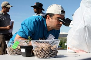 A field day attendee views a live nematode juvenile under the microscope.