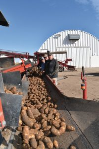 The Arnold Farms crew transfers spuds into the cellars.